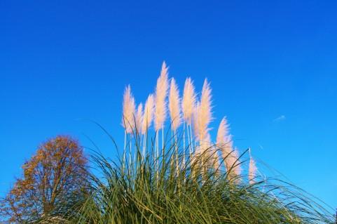 木枯らし1号は東京と大阪でのみ宣言される秋の風物詩