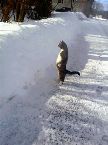 二本足で立っている猫の写真がどう見ても猫の恩返しのあの人(猫)な件